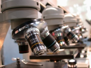 microscope-pictures6